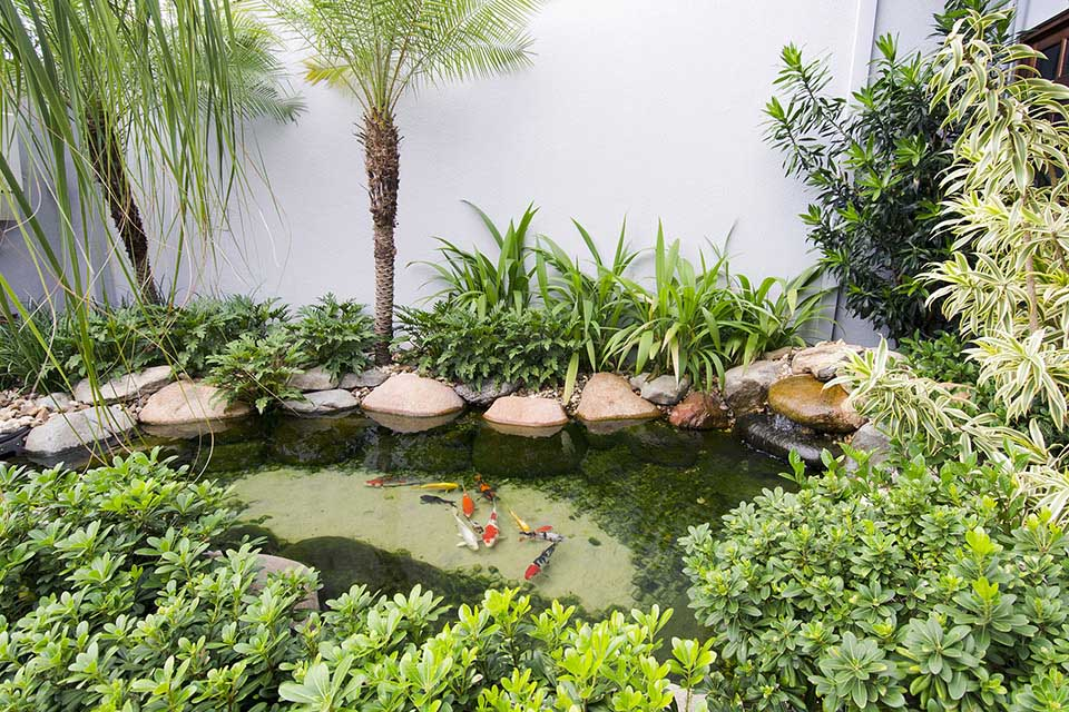 Ornamental Pond 02